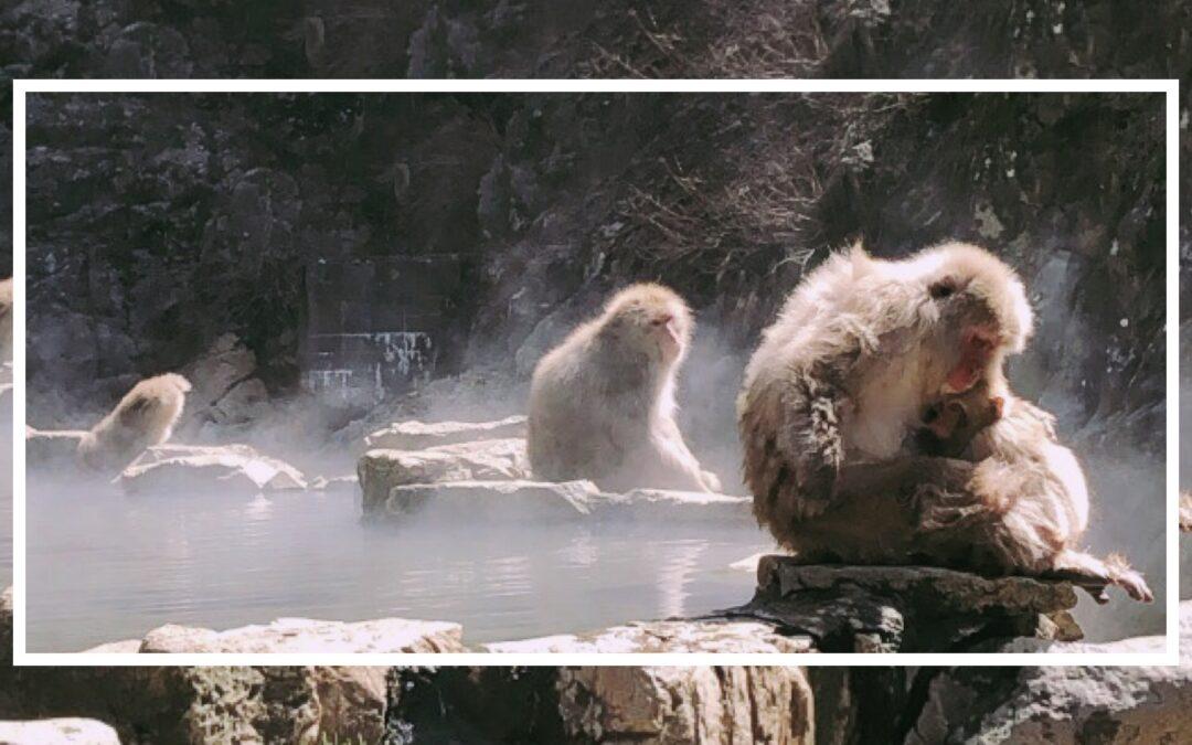 Gita allo Snow Monkey Park di Nagano