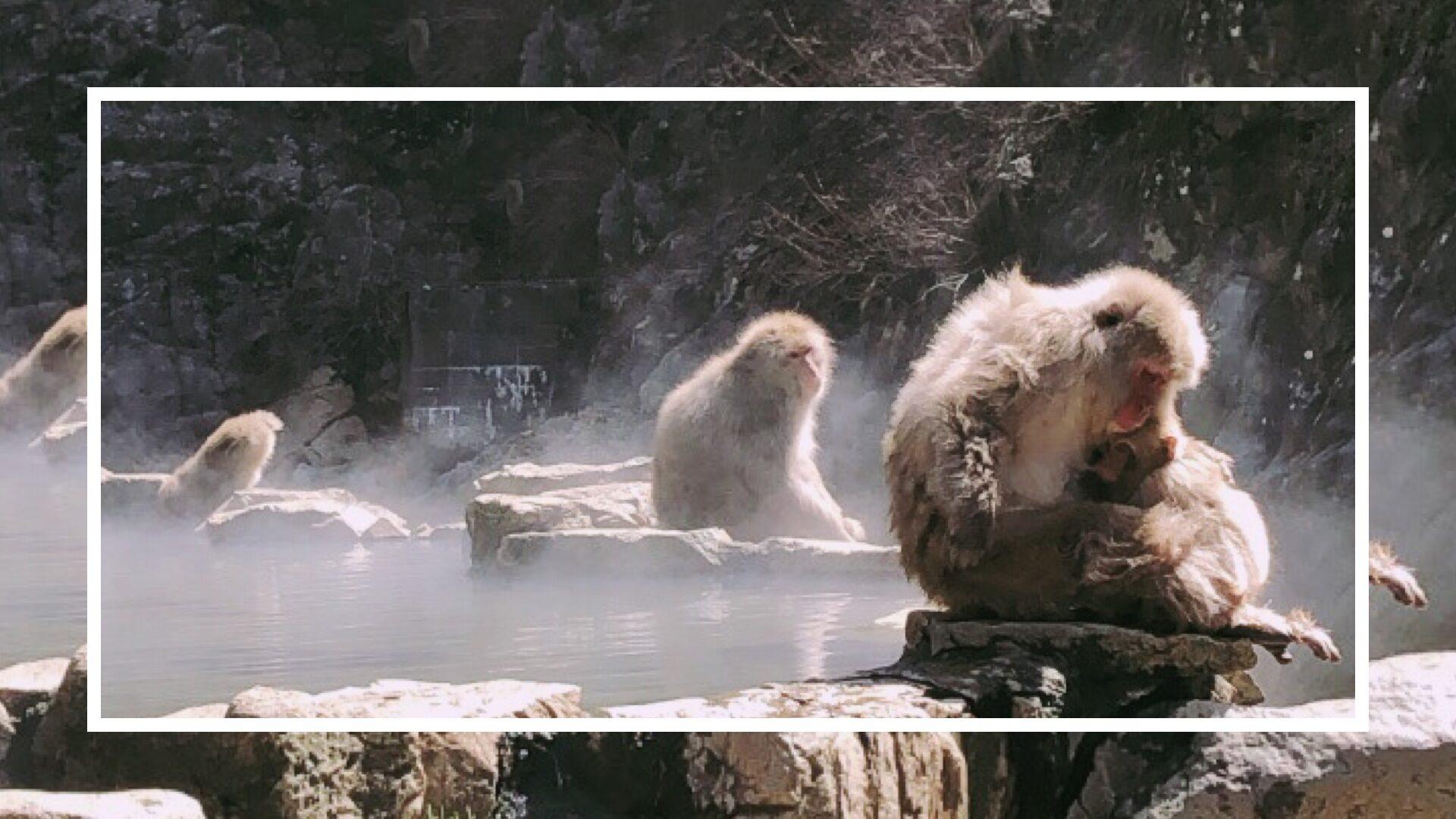 snow monkey park nagano